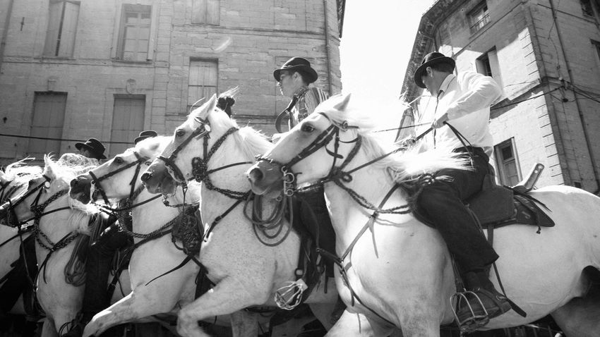 In competition for the trophy during the concours in Uzès. SUD_ Camargue Documentary Horse Whitehorse Manade Abrivado Uzés Provence Traditional Culture Blackandwhite