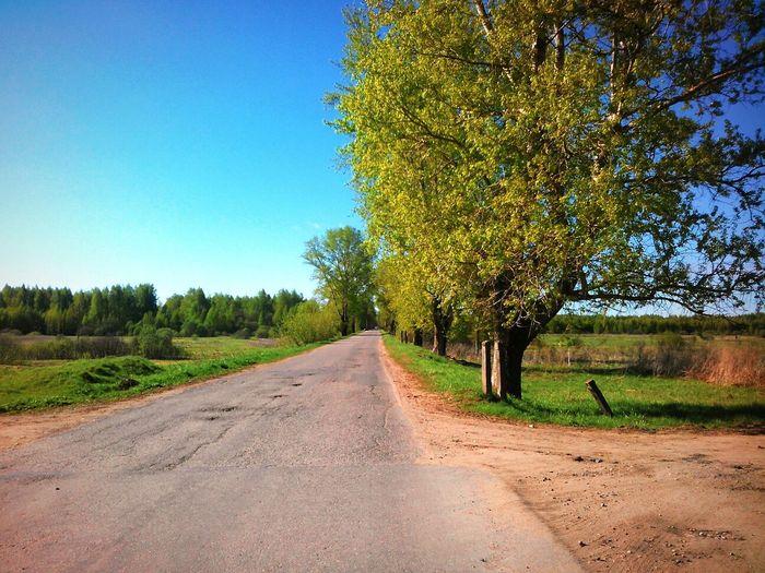 Дорога деревья солнце☀ Весна💐🌷🌿 Жизнь прекрасна♥