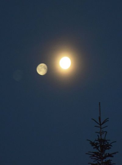 Allen eine gute Nacht. Moon Sky Night Space Low Angle View Nature Astronomy No People Beauty In Nature Full Moon Scenics - Nature Tranquility Plant Tree Outdoors Moonlight Tranquil Scene Clear Sky Growth Planetary Moon Eclipse Illusion Reflection Night Photography
