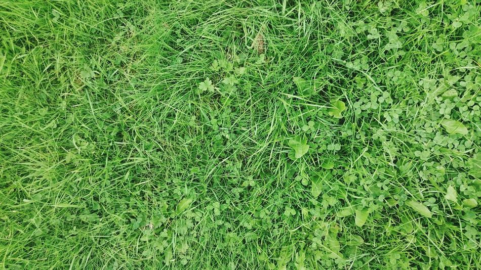Green grass, Grass Green Color Full Frame Backgrounds Nature Field No People Lawn Growth Day Meadow Outdoors Close-up Beauty In Nature Soccer Field Freshness