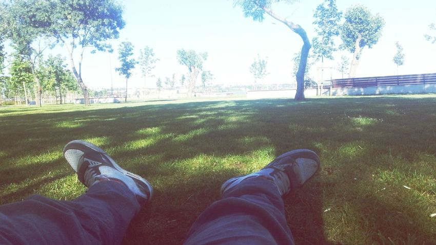 Sunny Day 🌞 Relaxation Drunkers
