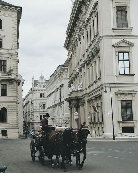 Horse Horsedrawn Horse Cart Street Architecture Built Structure Building Exterior Outdoors City Sky Domestic Animals Austria Architecture_collection Austrianphotographers EyeEm Selects