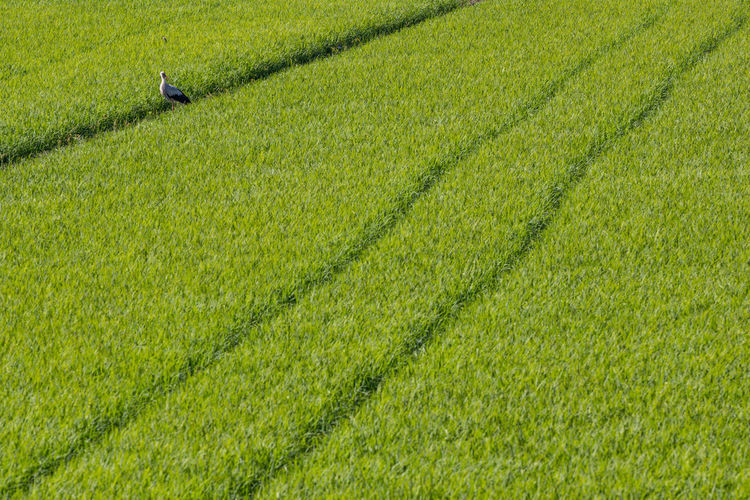 Agriculture Beauty In Nature Crop  Day Farm Field Freshness Grass Green Color Growth High Angle View Irrigation Equipment Landscape Nature No People Outdoors Rural Scene Scenics