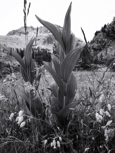 In Tree - Tha nature reserves many surprises in a beautiful alpine meadow - By Maximilien Rastello Photo MaximilienRastello Maxrastello BlackandWhite Vision EyeEm Best Shots - Black + White Travel Blackandwhite Summer Flowers Travel Photography Flowers,Plants & Garden