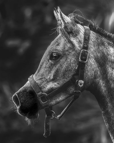 Horse portrait in black and white Close-up Focus On Foreground No People One Animal Animal Animal Themes Water Animal Wildlife Drop Day Animals In The Wild Vertebrate Outdoors Animal Head  Selective Focus Animal Body Part Pattern Sunlight Purity Nature