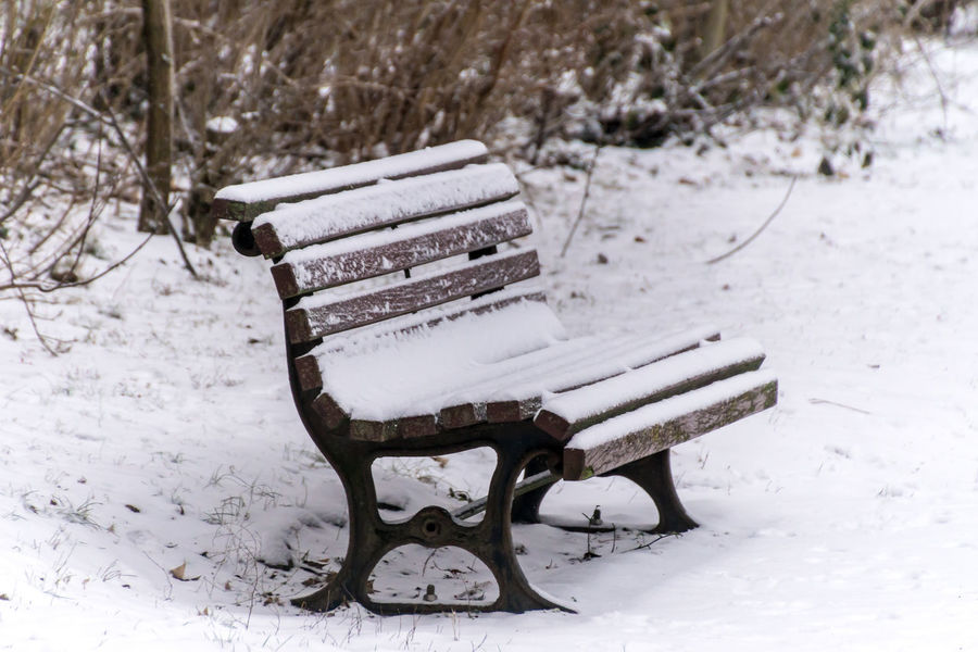 Bare Tree Beauty In Nature Bench Cold Temperature Covering Day Empty Frozen Nature No People Outdoors Parkbank Seating Bench Sitzbank Snow Snowing Weather Winter
