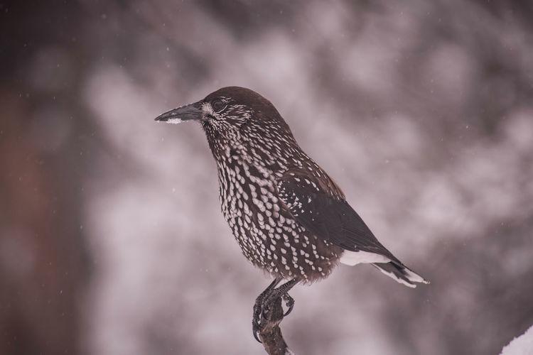 Close-up of bird perching on a snow