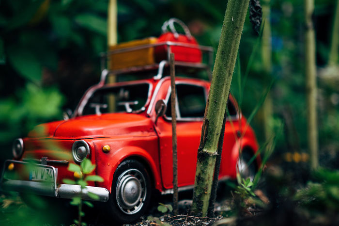 driving home Car Day Expedition Focus On Foreground Forest Land Vehicle Mode Of Transport No People Outdoors Red Red Transportation Traveling Traveling Home For The Holidays Tree