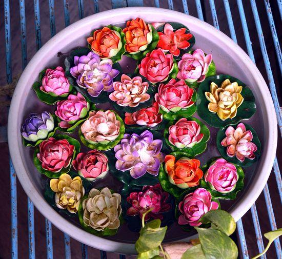 Close-up Flower Flower Head Freshness Lotoflower Multi Colored Plant