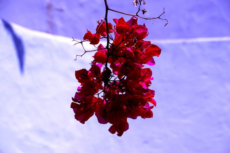 mediterraneo Beauty In Nature Close-up Day Flowering Plant Focus On Foreground Fragility Growth Nature No People Outdoors Plant Red Vulnerability