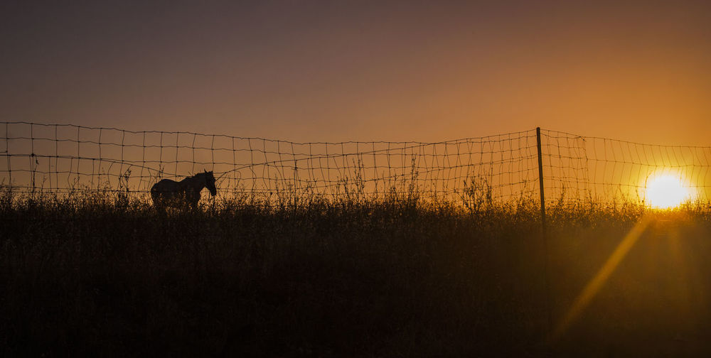 Silhouette horse by fence on field against sky during sunset