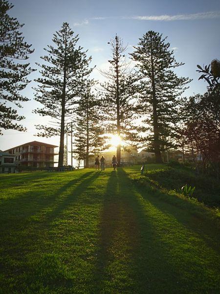Longgoodbye Long Goodbye Tree Nature Grass Beauty In Nature Outdoors Green Color Freshness Sky Thelonggoodbye Manvsnature  Australia Yamba