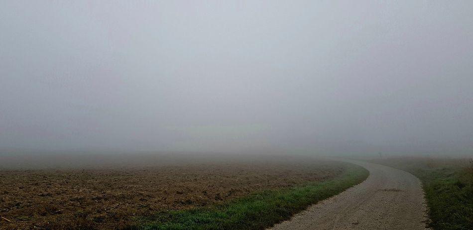 Rural Scene Fog Agriculture Field Weather Sky Landscape Agricultural Field
