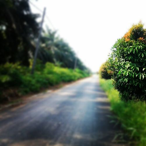 Instagram Panorama Green Nature