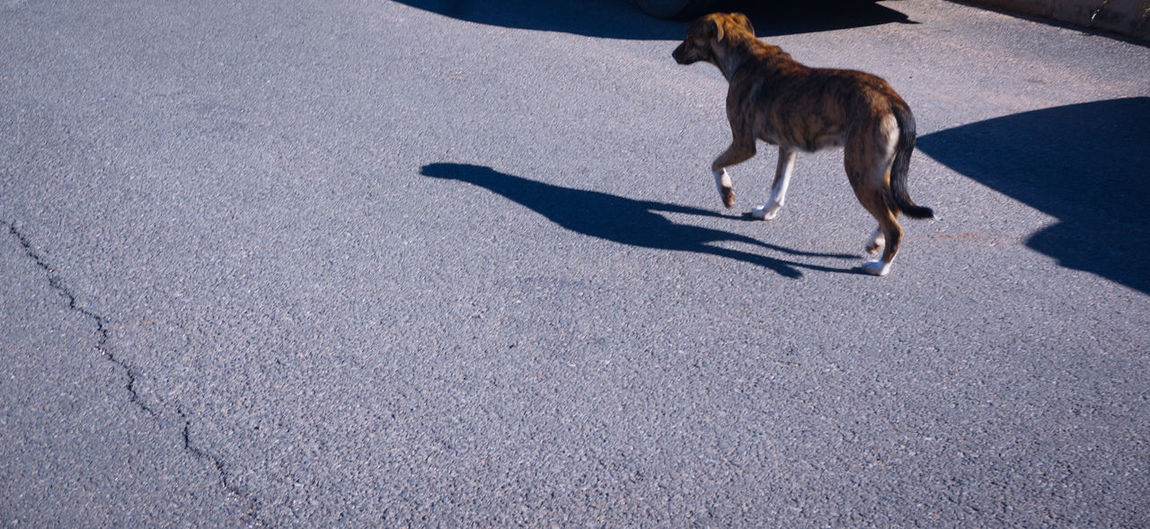 Follow your Shadow 🐕 👻 Light And Shadow Dog Canine Sunlight Road Animal Themes In The Street Streetphotography Outdoors Copy Space MnM MnMl Mnmlsm Minimalism Minimal Minimalistic Minimalmood Minimalist Minimalobsession Minimalart Minimalarchy Mobilephotography Shootermag