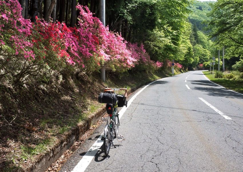 Cycling Travel Photography On Your Bike Landscape Bicycle Trip Flowers aproach to the Mitsumine Shrine 三峯神社 , Chichibu 秩父 , Saitama 埼玉, Japan