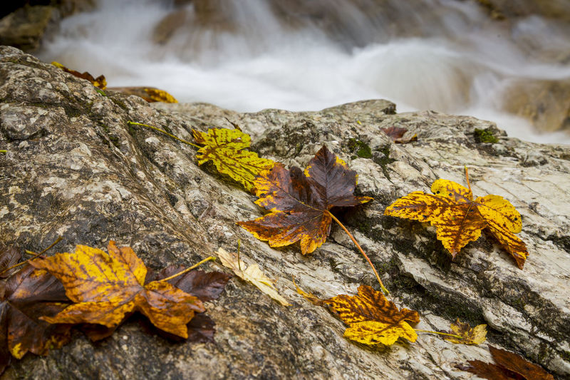 Herbst Plant