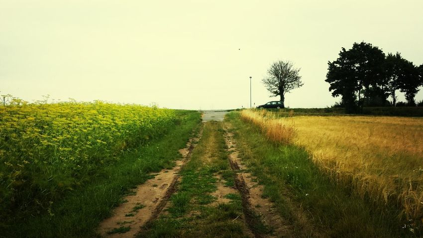 Landscape Taking Photos Take A Walk EyeEm Nature Lover