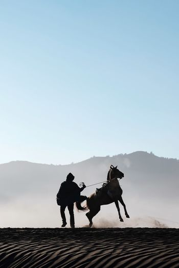 Silhouette man with horse at desert against clear sky