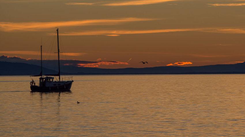 Boat On Lake Boat On Lake Geneva Lake View Nautical Vessel Scenics Sunset Water Yacht