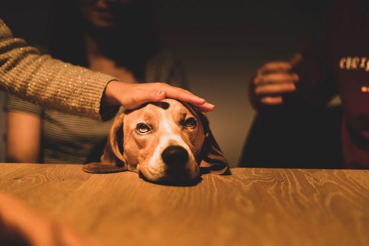 La sagesse s'acquiert avec le temps. Family Beagle First Eyeem Photo