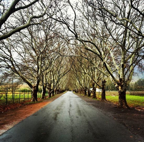 Winter's day Winter The Way Forward Tree Bare Tree Road Diminishing Perspective Day Outdoors Nature Beauty In Nature Sky No People first eyeem photo