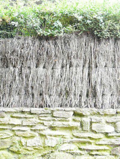 Canisse Wood Brick Brickwall Natural Fern Fern Holz Ziegel Naturfarn Natur Farn Eyeem Market