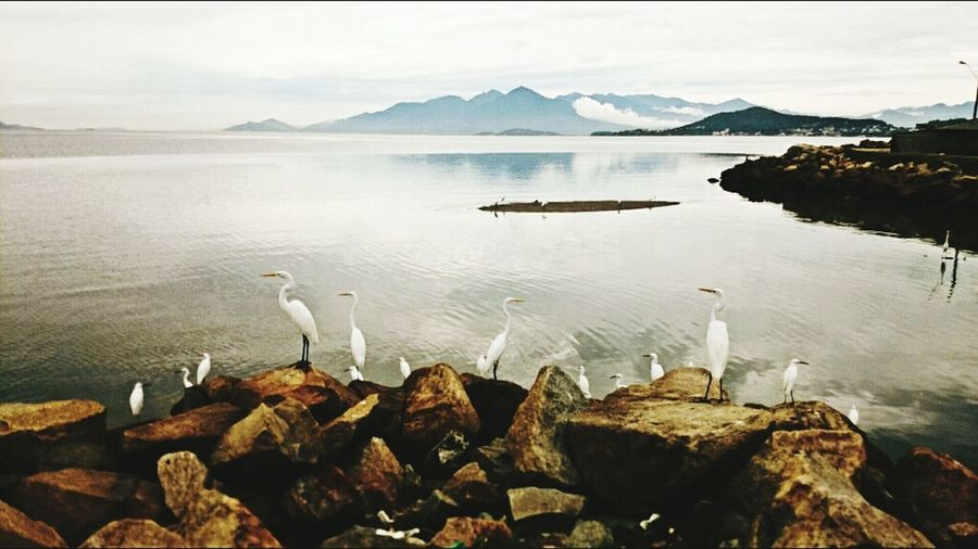 Egrets Perching On Rocks In Front Of Sea Against Sky