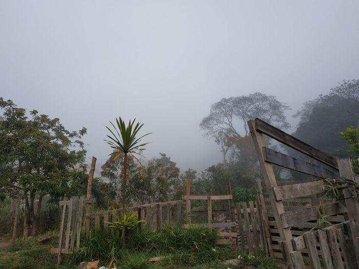 Neblina Franco Da Rocha Paisagem Sp, São Paulo SP Nature City Neblina *-* Cinza Paisagem Urbana City Great My City Tree Sky