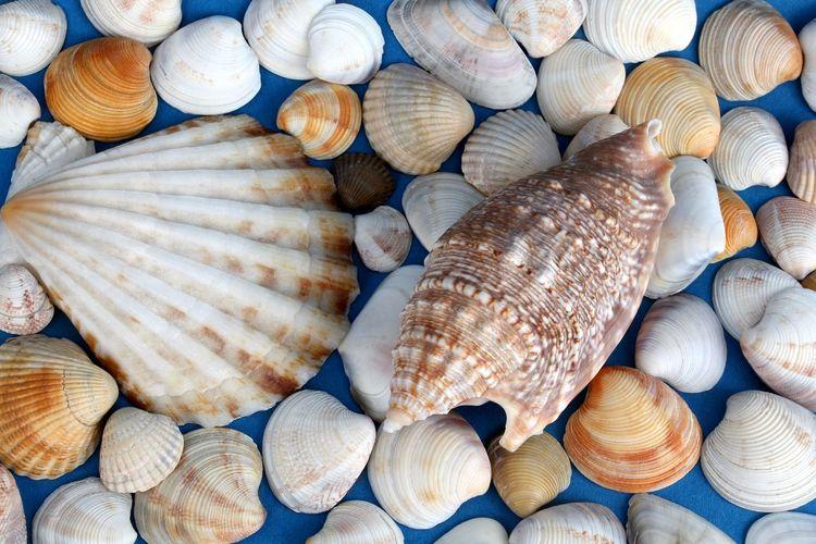 Seashells close up on blue background
