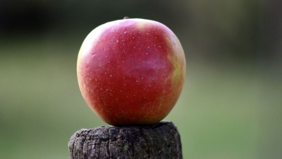 red apple on wooden post; still life Apple Farm Field Green The Week On EyeEm Abstract Backgrounds Apple - Fruit Arrangement Close-up Focus On Foreground Food Food And Drink Freshness Fruit Growth Health Healthy Eating Nature No People Outdoors Red Still Life Vegan Vitamin C Wooden Posts