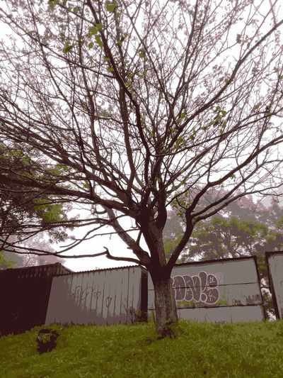 Tree and garages Artfoto Tree Garage Morning Graffiti Dark Photography Branches Sky