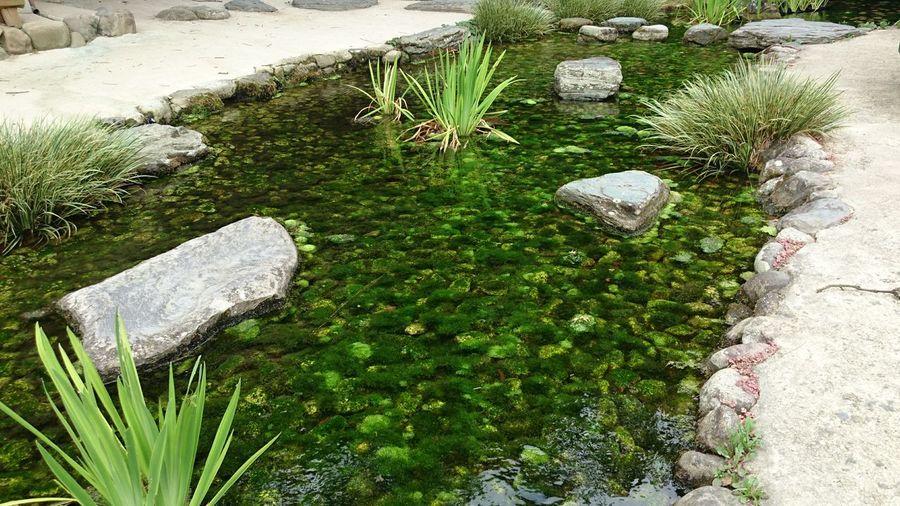 栗林公園 Ritsurin Garden Takamatsu 高松 川 緑 Green River 苔 Moss