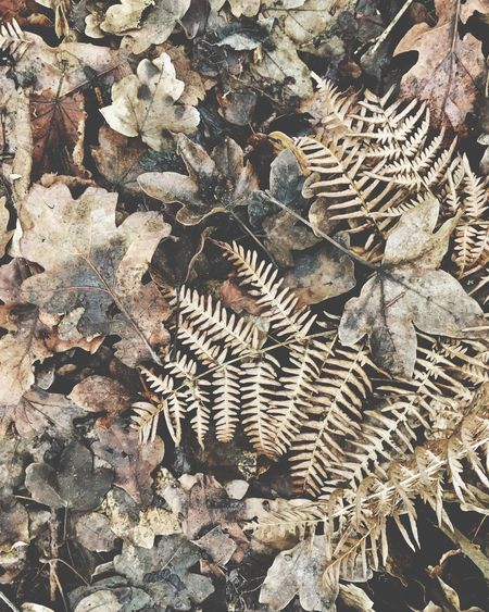 Forest floor Textured  Backgrounds Fern Forest Floor Winter Leaves Leaf Nature Outdoors High Angle View No People Large Group Of Objects Full Frame Close-up