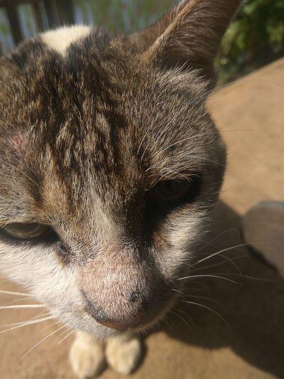 Cat HEAD Animal Eye