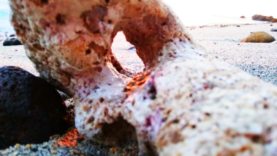 Sun set hits all the small, ignored thing. Beach Stone Sunset Sunlight Sun Ray Sunshine Sand Coral