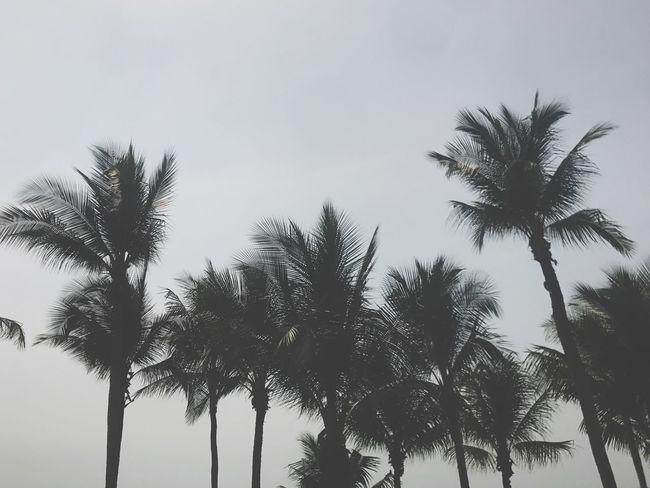Palm Tree Tree Low Angle View Tree Trunk Sky Nature Silhouette