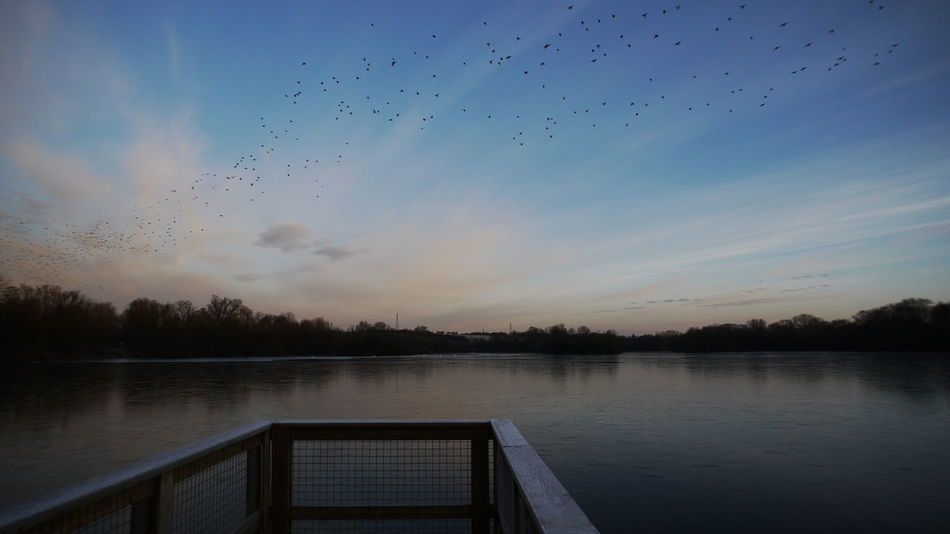 The Birds. Reflection Lake Sky Water Nature Bird No People Outdoors Day Beauty In Nature Tree Frosty Morning Water's Edge Cold Temperature Rushden Lakes No Edit, No Filter, Just Photography Animal Themes Animal Wildlife The BIRDS!! The Birds