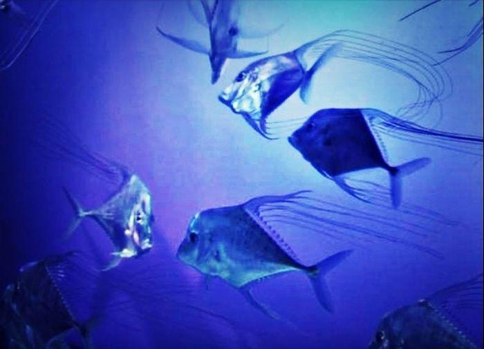 Fish Aquarium Melbourne Australia Animals
