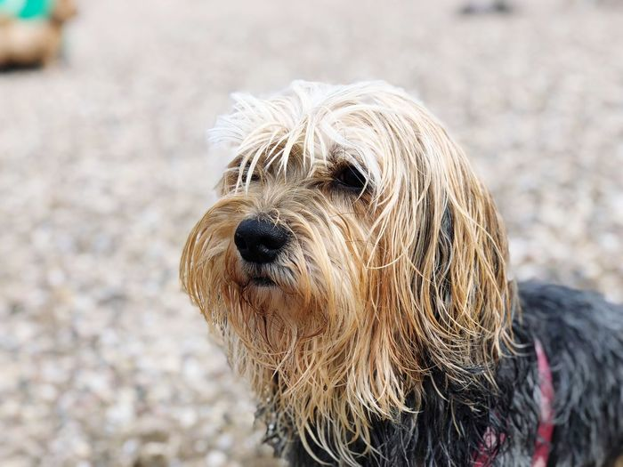 Doggy Vivi Wet