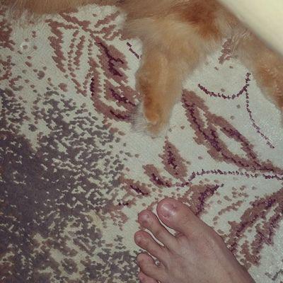 Instacats Cats Curly Kinkalow