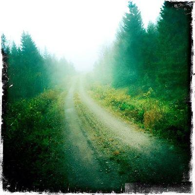 Dimma på Sjuvallsleden Delsbo H älsingland  Örvallen