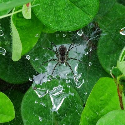Spotted wolf spider. Dang, August_2017. Malephotographerofthemonth Wildlife Wildlovers Sonyphotographyawards Yourshot_india Indiandiaries Indiaclick Indiantraveller The Week On EyeEm EyeEmNewHere