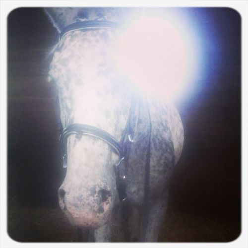 Salto <3 Horse Love Horses Equitation ! Best Horse