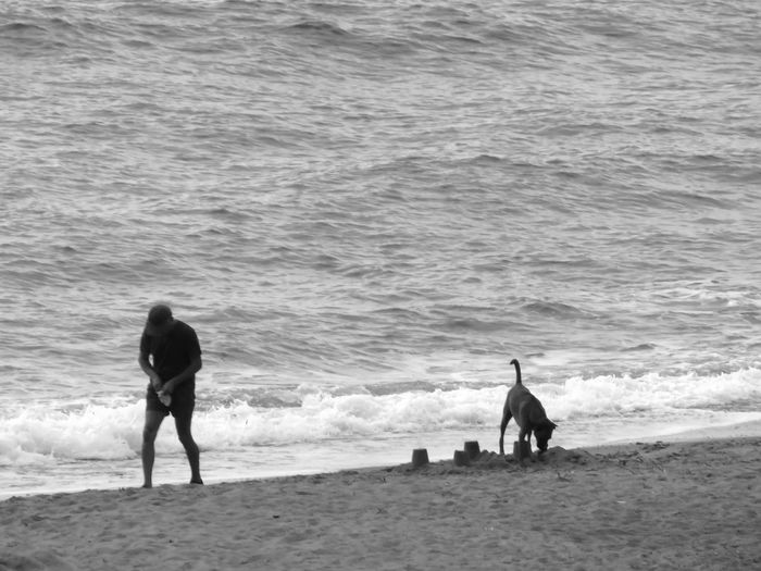 Beach Black & White Black And White Day Dog Leisure Activity Lifestyles Nature Outdoors Person Photographic Sequence Of 4 Photos Rear View Sand Scenics Sea Shore Solitude Summer Tourist Tranquil Scene Tranquility Vacations Water Wave Weekend Activities