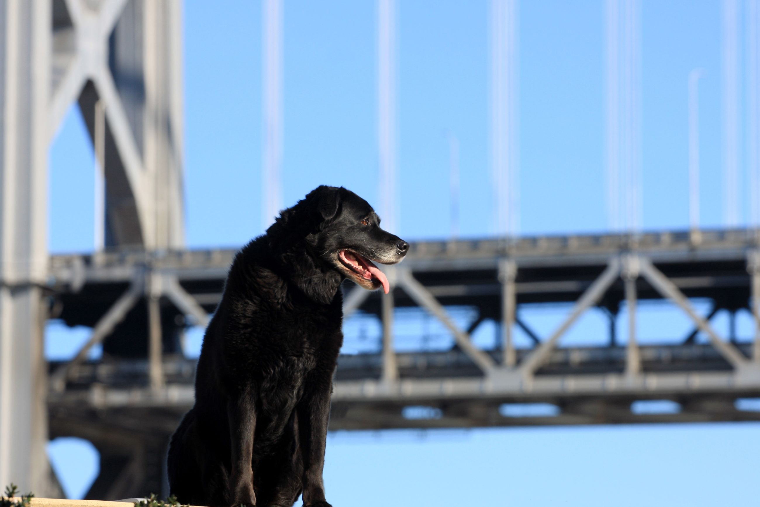 one animal, mammal, domestic animals, animal themes, pets, outdoors, bridge - man made structure, dog, architecture, built structure, day, sky, no people, close-up
