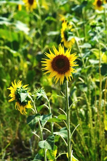 Learn & Shoot: Balancing Elements Enjoying Life Relaxing Moments Freedom Of Expression Photographic Memory Hi! Learn & Shoot: Working To A Brief Things I Like Greenery Long Drive Hanging Out Selective Focus Eye4photography  India Click Click 📷📷📷 Taking Photos Check This Out Most Popular Sunflower
