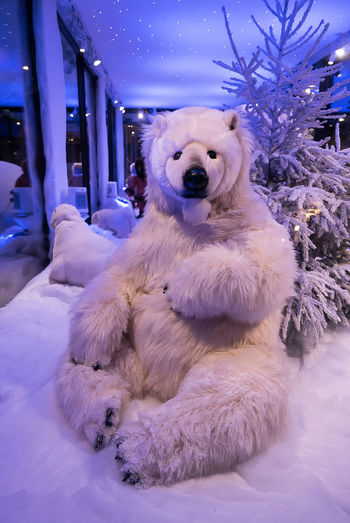 Bear Animal Themes Close-up Cold Temperature Day Domestic Animals Indoors  Mammal No People One Animal Pets Relaxation Snow Winter