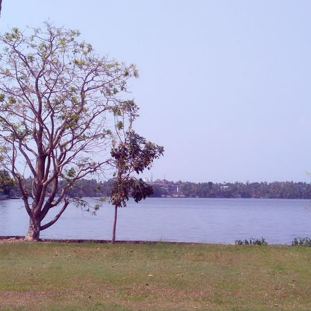 Tree Lake Landscape Tranquility Beauty In Nature Outdoors Water Nature Sky No People Day Grass Flower EyeEm Diversity