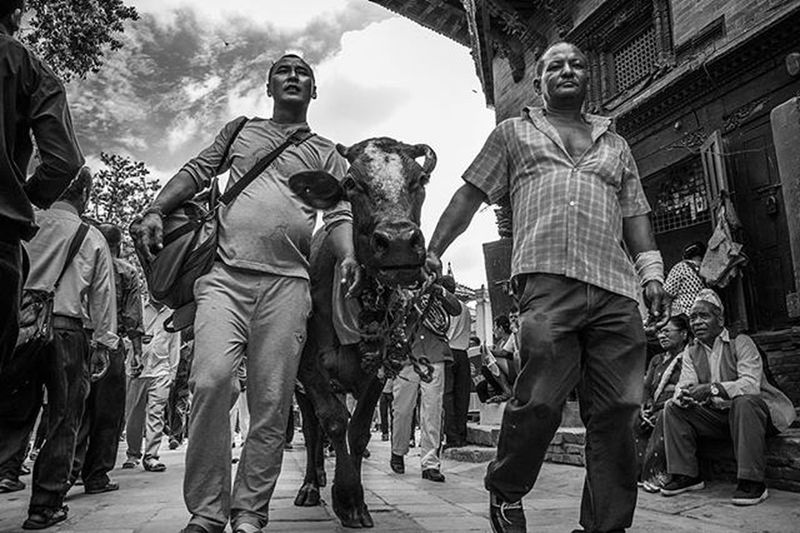 Basantapur, Hanuman Dhoka, Kathmandu. Gaijatra. August 30th. Kathmandu Nepal Festival Newar Cow Gaijatra Culture Streetphotography Street @streets_kathmandu